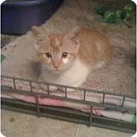 Adopt A Pet :: Mr. Piggles - Mobile, AL