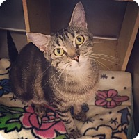 Adopt A Pet :: Sissy - Raleigh, NC
