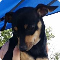 Adopt A Pet :: Oscar - Huntingburg, IN