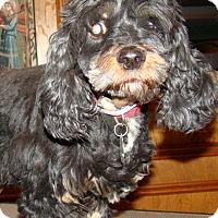 Adopt A Pet :: Sammi Sue - Sugarland, TX