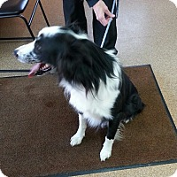 Adopt A Pet :: Riggs - Greeley, CO