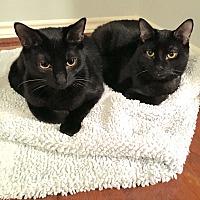 Adopt A Pet :: Mike & Ike - Arlington/Ft Worth, TX