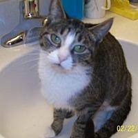 Adopt A Pet :: Valentine - Boynton Beach, FL