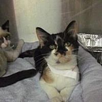 Adopt A Pet :: Hazel - Miami, FL
