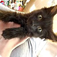 Adopt A Pet :: Teddy - Exton, PA