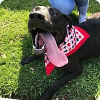 Adopt A Pet :: Prince - Memphis, TN