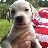 Adopt A Pet :: Ouiser - Savannah, GA