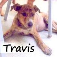 Adopt A Pet :: TRAVIS - Palm Coast, FL