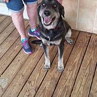 Adopt A Pet :: Maverick - Uxbridge, MA