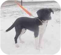 Labrador Retriever/Hound (Unknown Type) Mix Dog for adoption in Honesdale, Pennsylvania - Princess