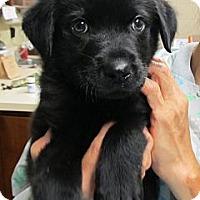 Adopt A Pet :: Danny - Kingwood, TX