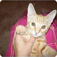 Adopt A Pet :: Adobe - Davis, CA