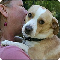 Adopt A Pet :: Jake - Concord, CA