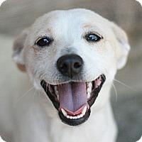 Adopt A Pet :: Jack - Canoga Park, CA