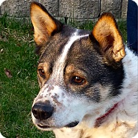 Adopt A Pet :: Bandit - Delano, MN