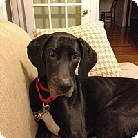 Adopt A Pet :: Stassi - Manassas, VA