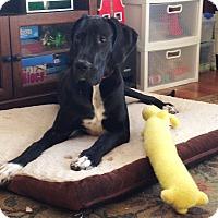 Adopt A Pet :: Jupiter - Broomfield, CO