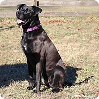 Adopt A Pet :: Hali - Bedford, VA