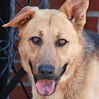 German Shepherd Dog Mix Dog for adoption in Los Angeles, California - Wyatt von Earp