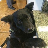 Adopt A Pet :: Nestle - Oak Ridge, NJ