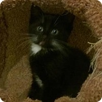 Adopt A Pet :: Bilbo - Burlington, WA