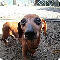Adopt A Pet :: Rusty - Tillamook, OR