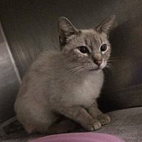 Adopt A Pet :: Katie - San Bernardino, CA