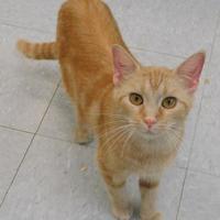 Adopt A Pet :: Colette - Owensboro, KY