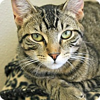Adopt A Pet :: Set - Richland Hills, TX