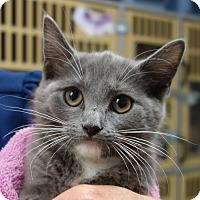 Adopt A Pet :: Abilene - Greenfield, IN