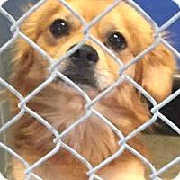 Adopt A Pet :: Rocky-ADOPTION PENDING - Boulder, CO