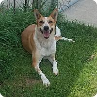 Adopt A Pet :: Billy Jean - Moberly, MO