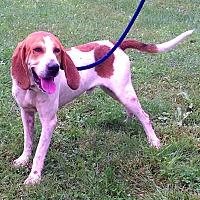 Adopt A Pet :: Marmaduke - Metamora, IN