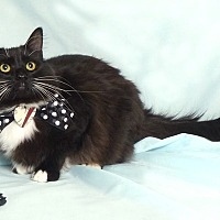 Adopt A Pet :: Marilyn - Kerrville, TX