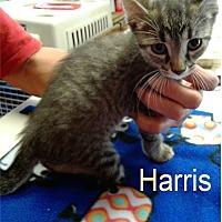 Adopt A Pet :: Harris - Ozark, AL