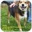 Photo 1 - Beagle Mix Dog for adoption in Somerset, Pennsylvania - Beaney