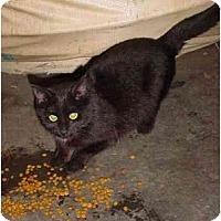 Adopt A Pet :: warehouse MiMi - cincinnati, OH