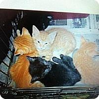 Adopt A Pet :: Kitties - Southampton, PA