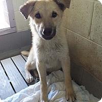 Adopt A Pet :: Baxter - Franklin, KY