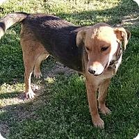 Adopt A Pet :: Sage - Richmond, VA