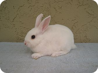 Other/Unknown Mix for adoption in Bonita, California - Tubs