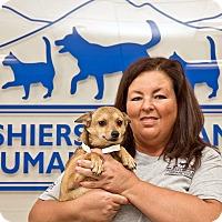 Adopt A Pet :: Teensie - Cashiers, NC