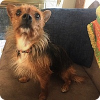 Adopt A Pet :: Peanut - Beavercreek, OH