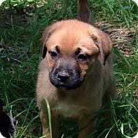 Adopt A Pet :: Julep - Christiana, TN