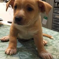Adopt A Pet :: 29775628 - St. Thomas, VI