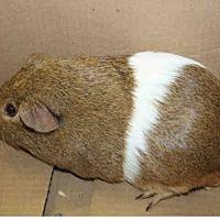 Adopt A Pet :: *Urgent* Xander - Fullerton, CA