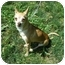 Photo 2 - Chihuahua Dog for adoption in Milwaukee, Wisconsin - Brownie