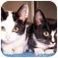 Photo 4 - Domestic Shorthair Kitten for adoption in Oklahoma City, Oklahoma - Rusty