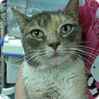 Adopt A Pet :: Helena Bonham Carter - Richboro, PA