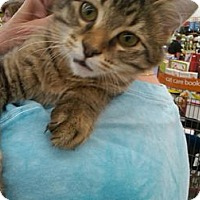 Adopt A Pet :: Luther - Sterling Hgts, MI